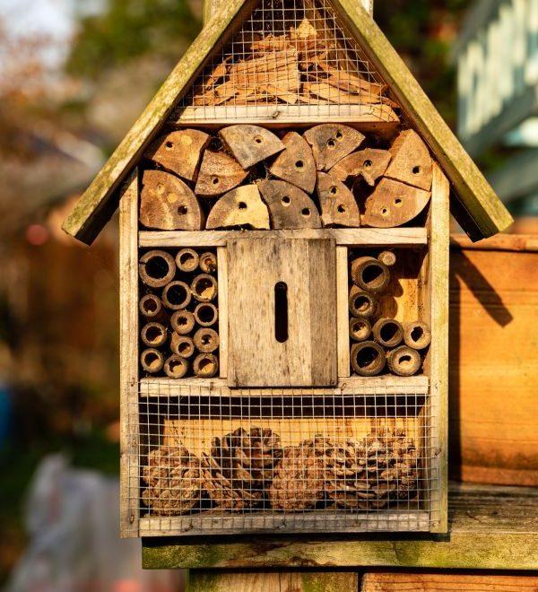 """Neu dabei: """"Wildbienenhotel selber bauen"""""""
